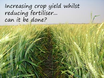 Monitoring Nitrogen Efficiency in Crops