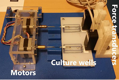 Measuring forces in human tendon constructs. The data acquisition system comprises force transducers, stepper motors with a motor controller, culture wells, and a Microlink 751 data collection system.