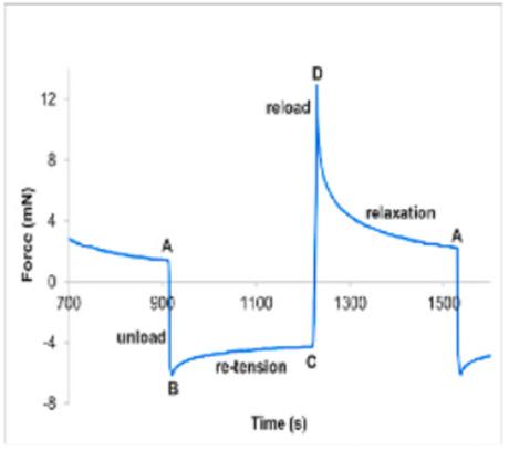 Tendon force graph