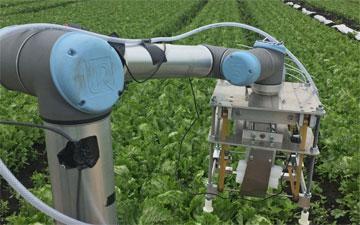 Vegebot harvest lettuce