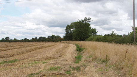 Straw in field after harvest